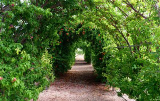 Fruit trees tunnels at entrance