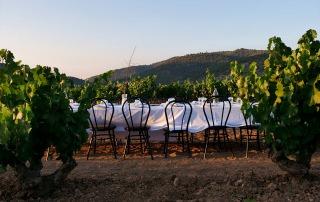 Wine, gastronomy & culture 4